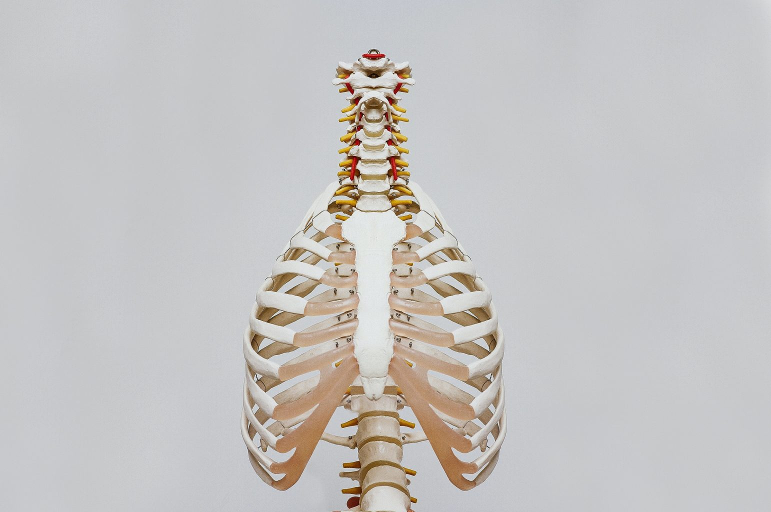 Bare skeleton torso Photo by Nino Liverani on Unsplash